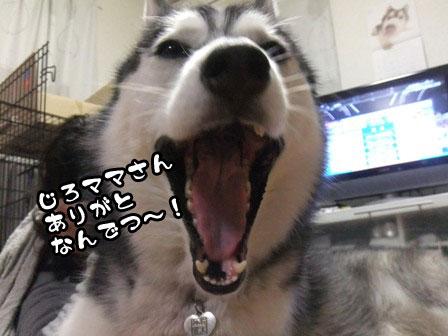 2_20111128212707.jpg