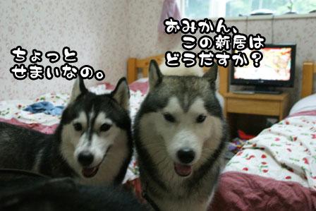 30_20110804210111.jpg