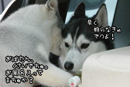 30_20120319190853.jpg