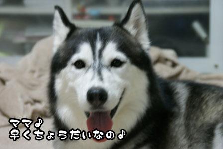 31_20110811220033.jpg