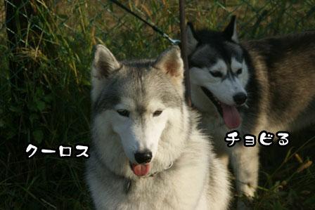35_20111013210120.jpg
