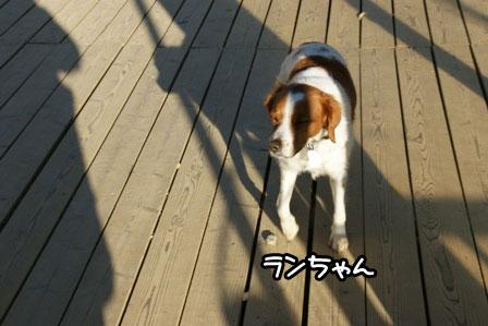 38_20110110211721.jpg