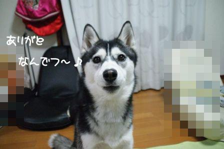 3_20100325213140.jpg