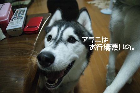 3_20100804213106.jpg