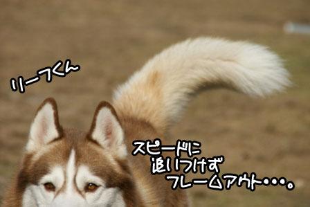 3_20110110205732.jpg