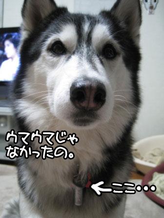 3_20110127202413.jpg