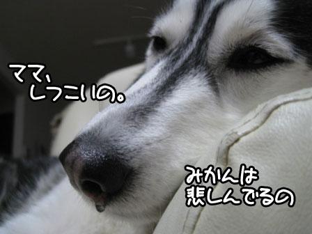3_20110129192547.jpg