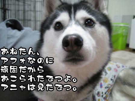 3_20110215211359.jpg