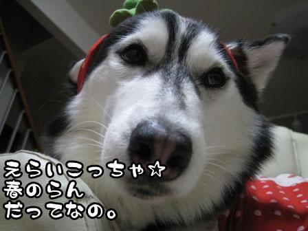 3_20110228211650.jpg