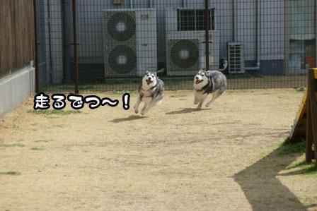 3_20110301203440.jpg