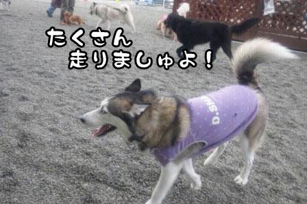 3_20110327200459.jpg
