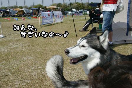 3_20110417190251.jpg
