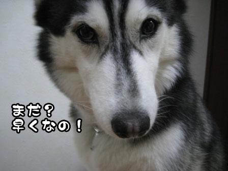 3_20110420204705.jpg