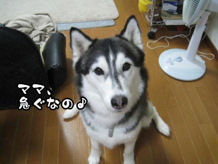 3_20110530220847.jpg