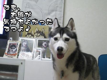 3_20110614213003.jpg