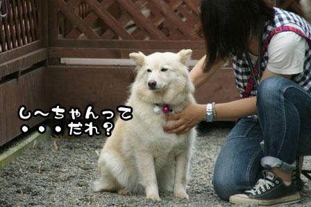 3_20110628202259.jpg