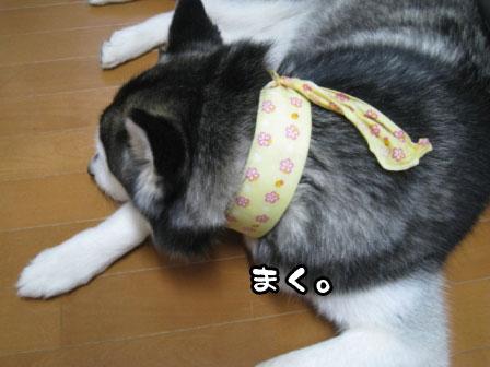 3_20110702210642.jpg