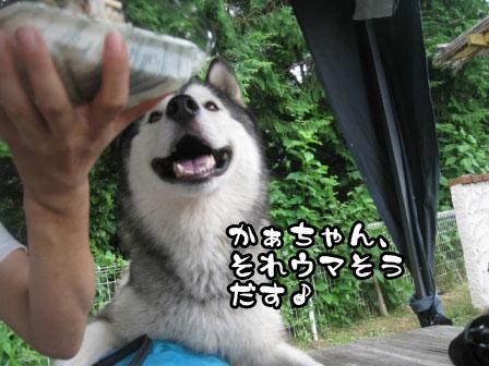 3_20110829214615.jpg