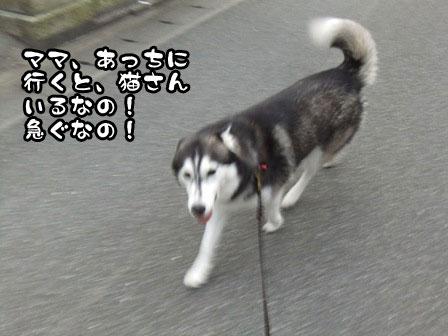 3_20110919201517.jpg