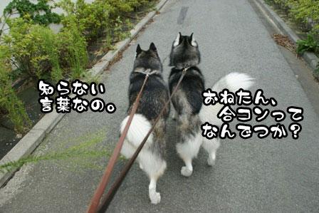 3_20110930202927.jpg