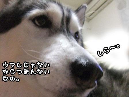 3_20111018210701.jpg