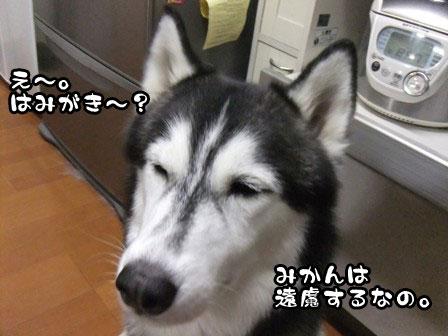 3_20111019211735.jpg