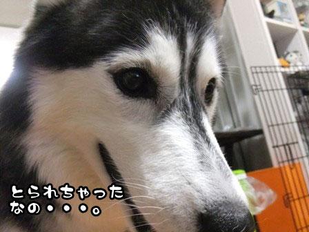 3_20111021212259.jpg