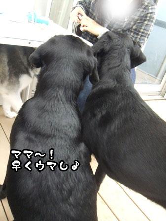 3_20111103215451.jpg