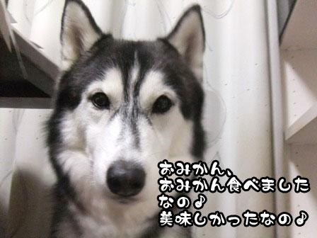3_20111128212711.jpg