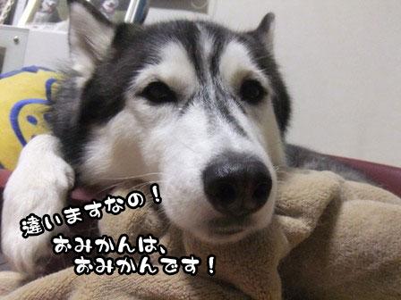 3_20111201211110.jpg