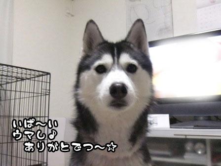 3_20120109214223.jpg