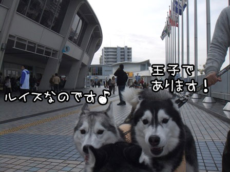 3_20120123203202.jpg