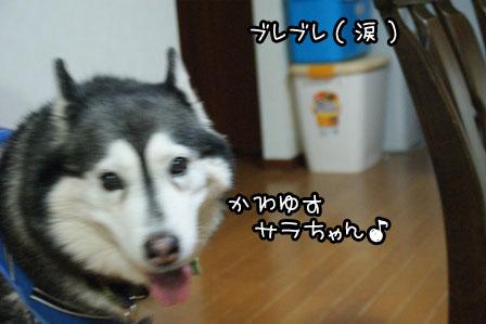 3_20120319181433.jpg