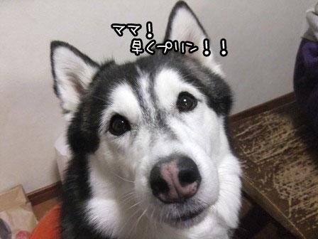 3_20120416212515.jpg