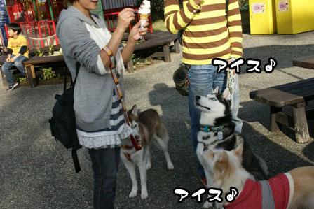 41_20111115211444.jpg