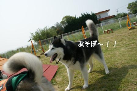 42_20100601205937.jpg