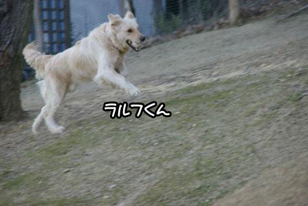 43_20110110211751.jpg