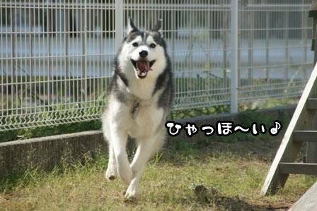 45_20111015221654.jpg