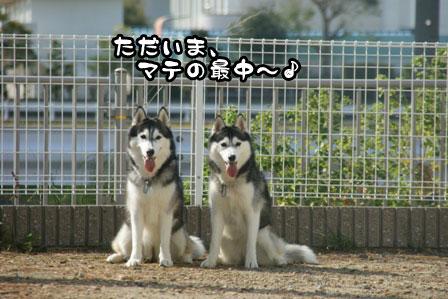 46_20111015221704.jpg