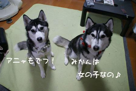 4_20100303205444.jpg