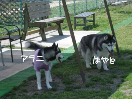 4_20100426210147.jpg