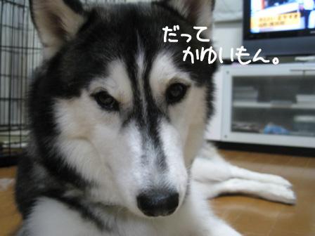 4_20100810192520.jpg