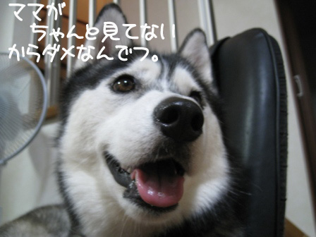 4_20101024201931.jpg