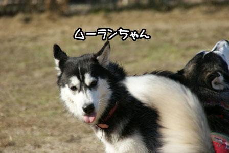 4_20110110205737.jpg