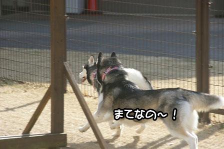 4_20110201193145.jpg