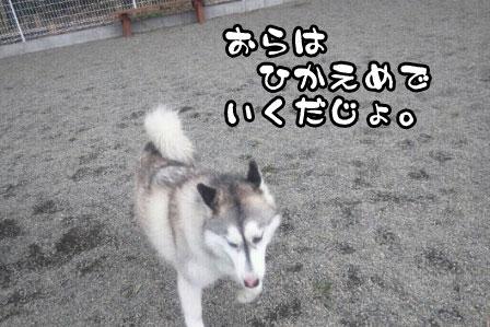 4_20110327200506.jpg
