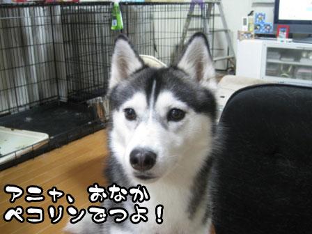 4_20110530220852.jpg
