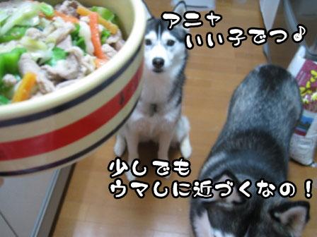 4_20110603215240.jpg