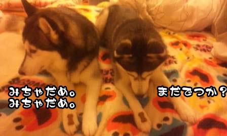 4_20110621205953.jpg