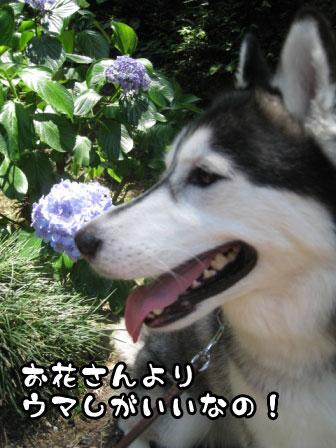 4_20110625215321.jpg